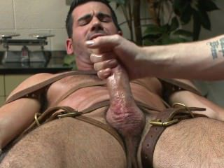 colt, hairy, homosexual, horny, muscle